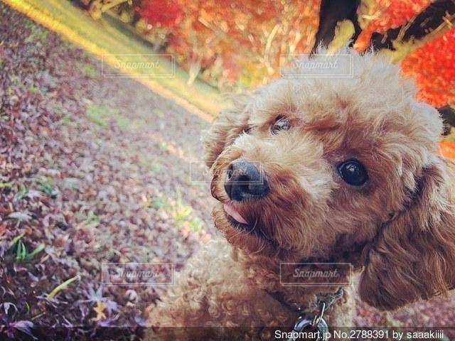 草の中に座っている犬の写真・画像素材[2788391]