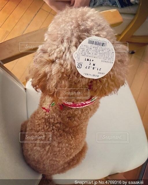 うしろ姿 シール シール犬 画像 素材 写真の写真・画像素材[4769316]