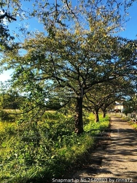夏の青空と道なりに緑豊かな草木が生茂る自然風景の写真・画像素材[2640803]