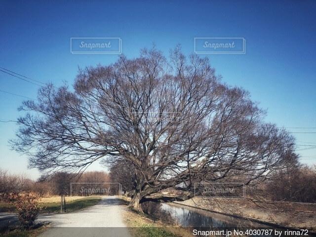 冬の青空と川辺の大きな樹木と一本道がある自然豊かな田舎の風景の写真・画像素材[4030787]