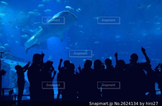 動物の写真・画像素材[2624134]