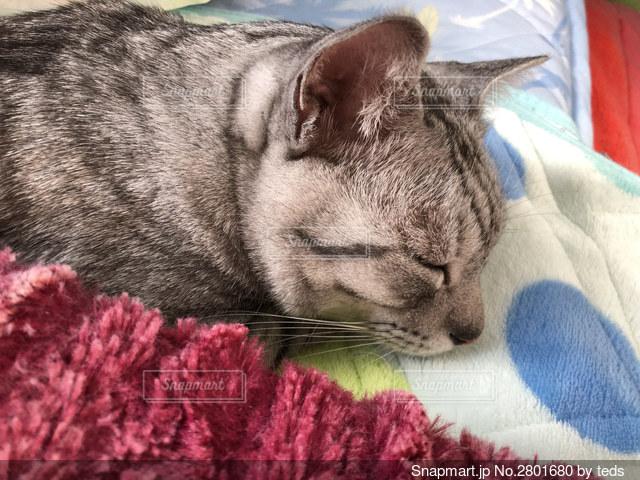 おやすみ猫ちゃんの写真・画像素材[2801680]