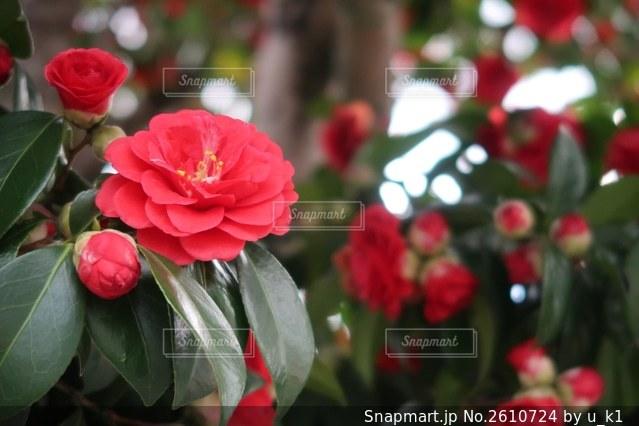 花の写真・画像素材[2610724]