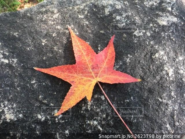 紅葉の葉 1枚アップの写真・画像素材[2623798]