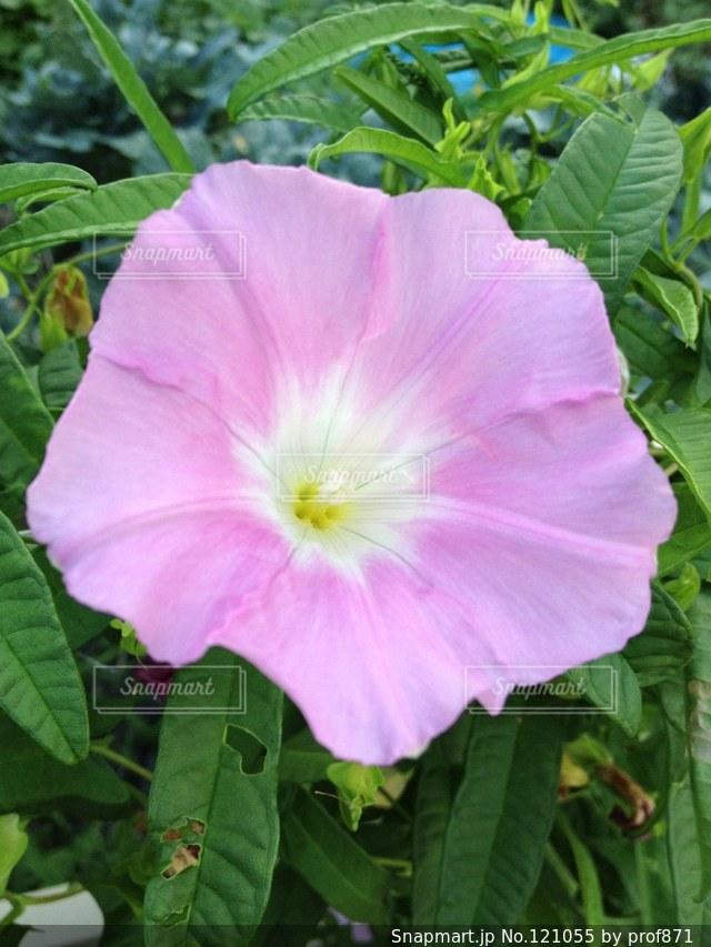 花の写真・画像素材[121055]