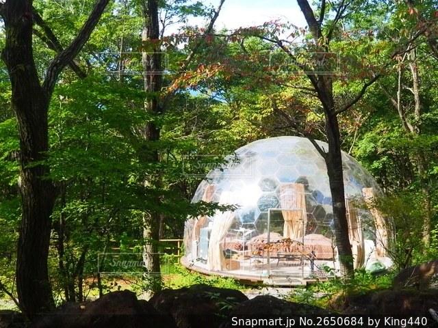 透明ドームでのグランピングの写真・画像素材[2650684]