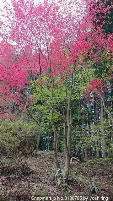 森の中の木の写真・画像素材[3180785]