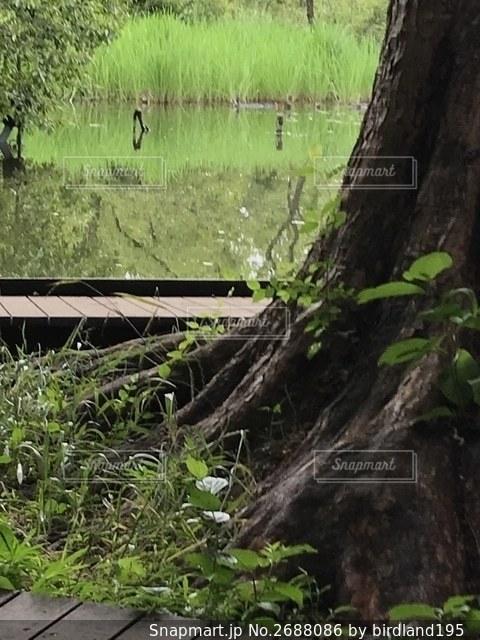 水面を背景に大きな木の写真・画像素材[2688086]