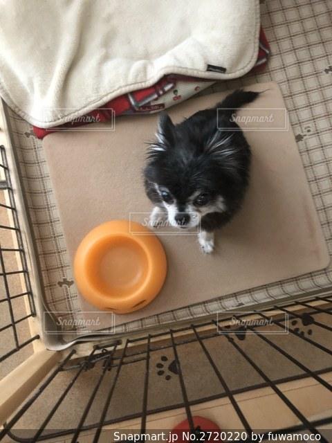 エサ待ちの犬の写真・画像素材[2720220]
