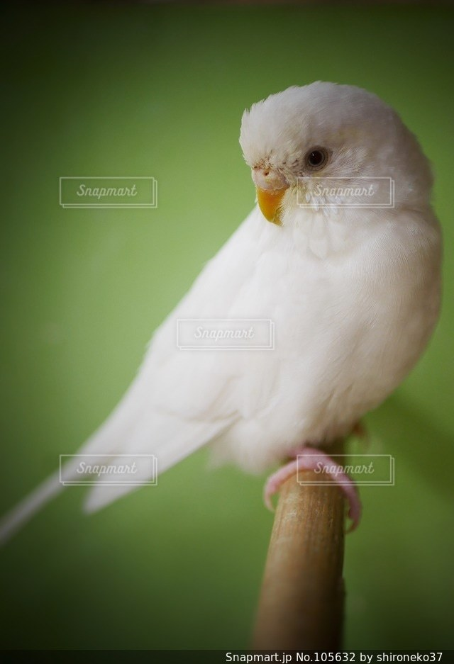 鳥の写真・画像素材[105632]