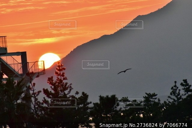 夕暮れ時に空を飛ぶ鳥の群れの写真・画像素材[2736824]