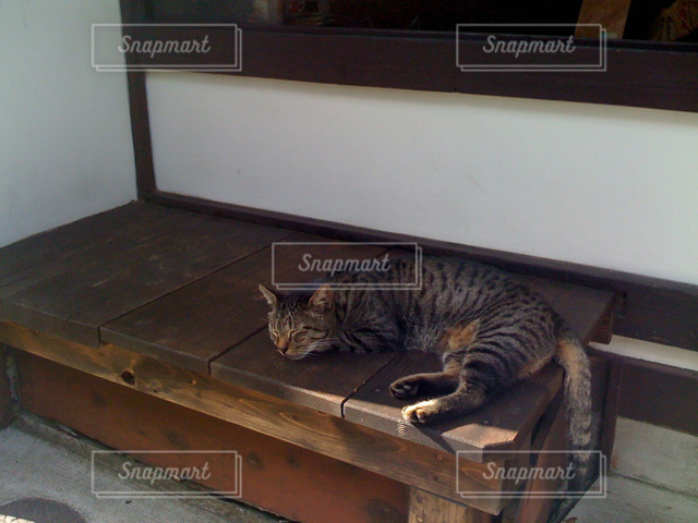 猫 - No.122181