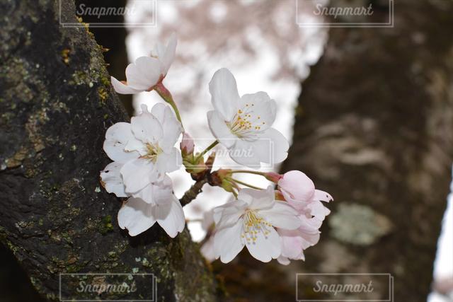自然の写真・画像素材[122292]
