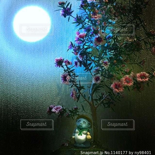 タヌキの月見の写真・画像素材[1140177]
