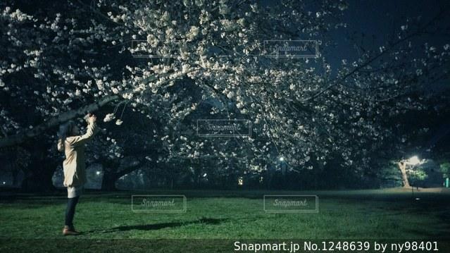 夜桜撮影の写真・画像素材[1248639]