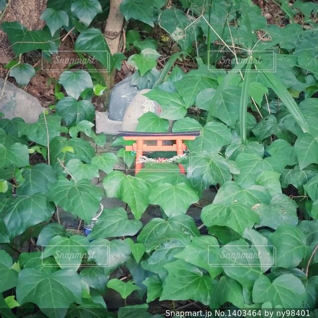 小さな鳥居の写真・画像素材[1403464]