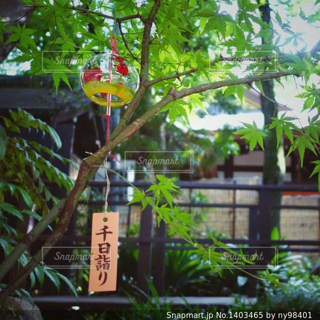 千日詣りの写真・画像素材[1403465]
