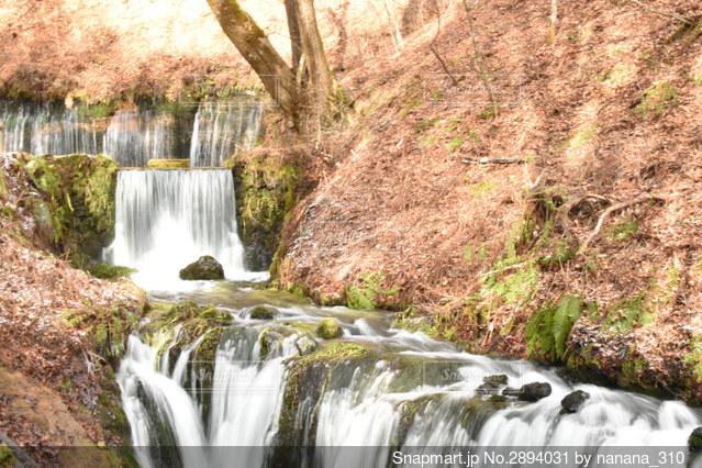 滝の写真・画像素材[2894031]