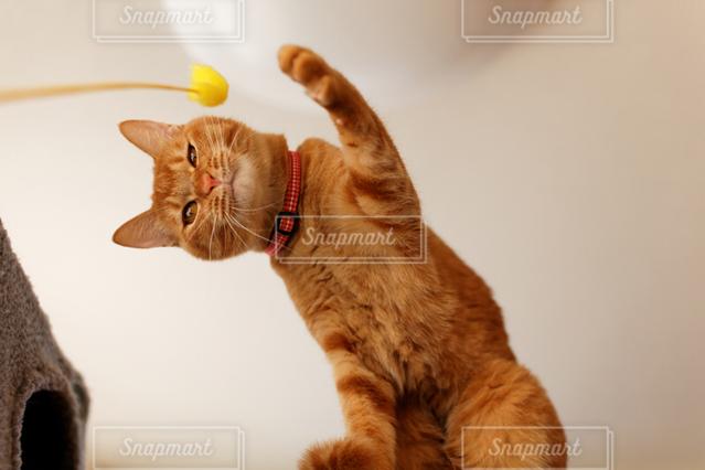 猫 - No.121895