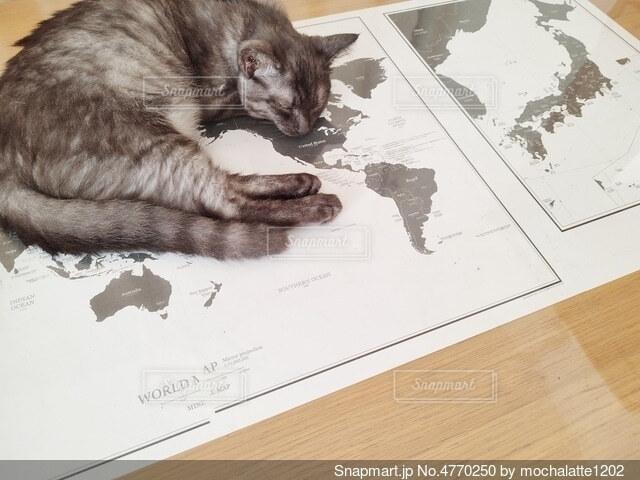 横たわる猫の写真・画像素材[4770250]