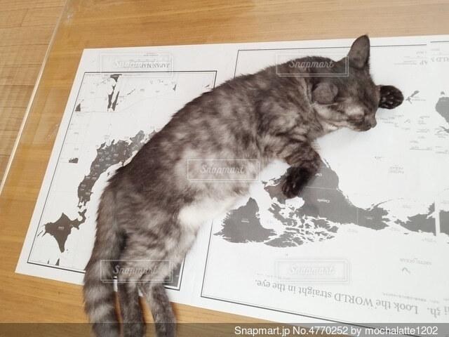 テーブルの上に乗っている猫の写真・画像素材[4770252]
