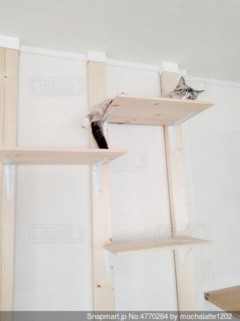 キャットタワーで寝ている猫の写真・画像素材[4770284]