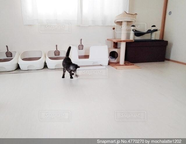 遊んでいる子猫の写真・画像素材[4770270]