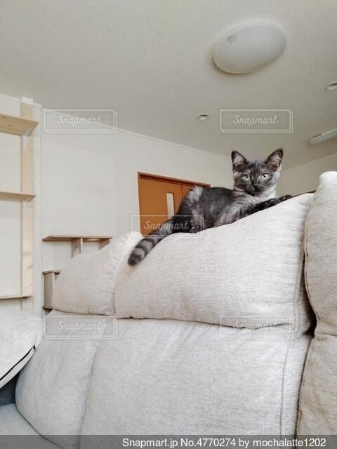 子猫の写真・画像素材[4770274]