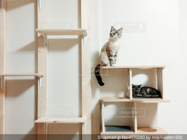 キャットタワーの猫の写真・画像素材[4770280]