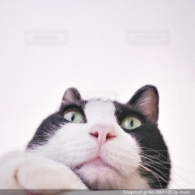 ブサカワ猫の写真・画像素材[3891125]