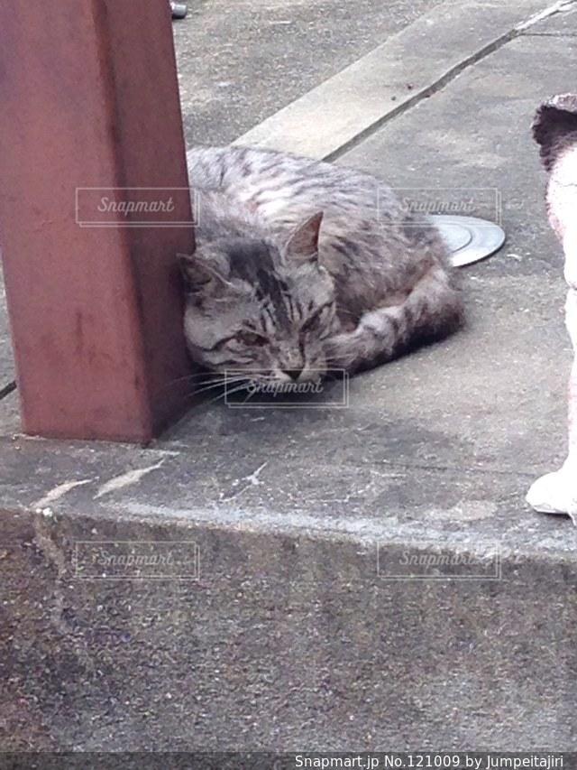 猫の写真・画像素材[121009]