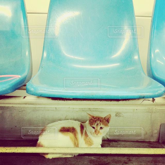 猫 - No.121505