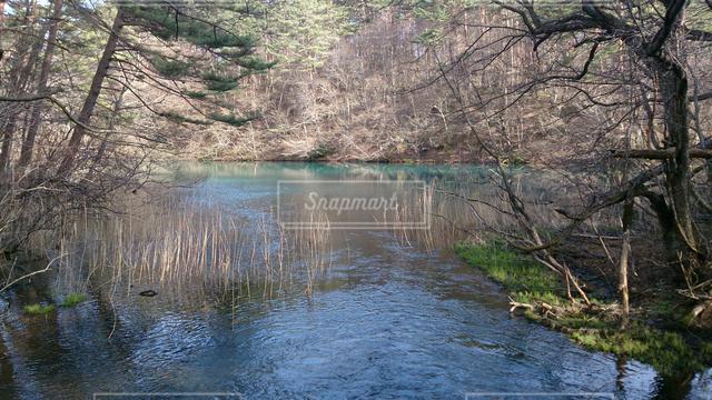 自然の写真・画像素材[126056]