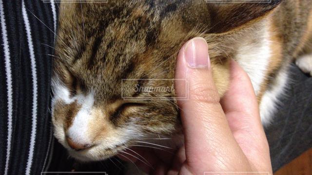 猫の写真・画像素材[121637]