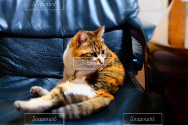 猫 - No.122348