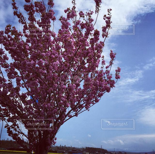 自然の写真・画像素材[121699]