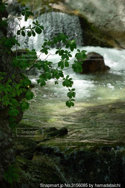 岩の隣の水の写真・画像素材[3156085]