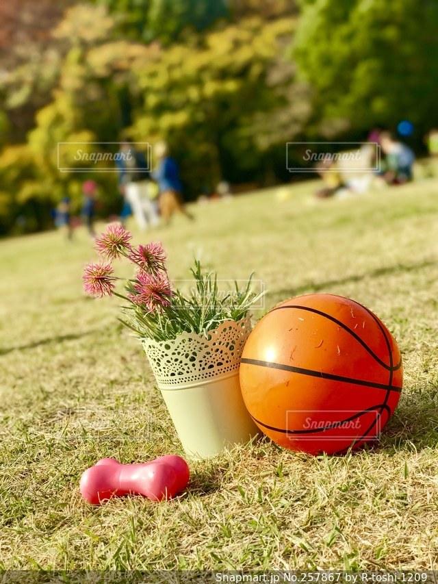 ボールの写真・画像素材[257867]
