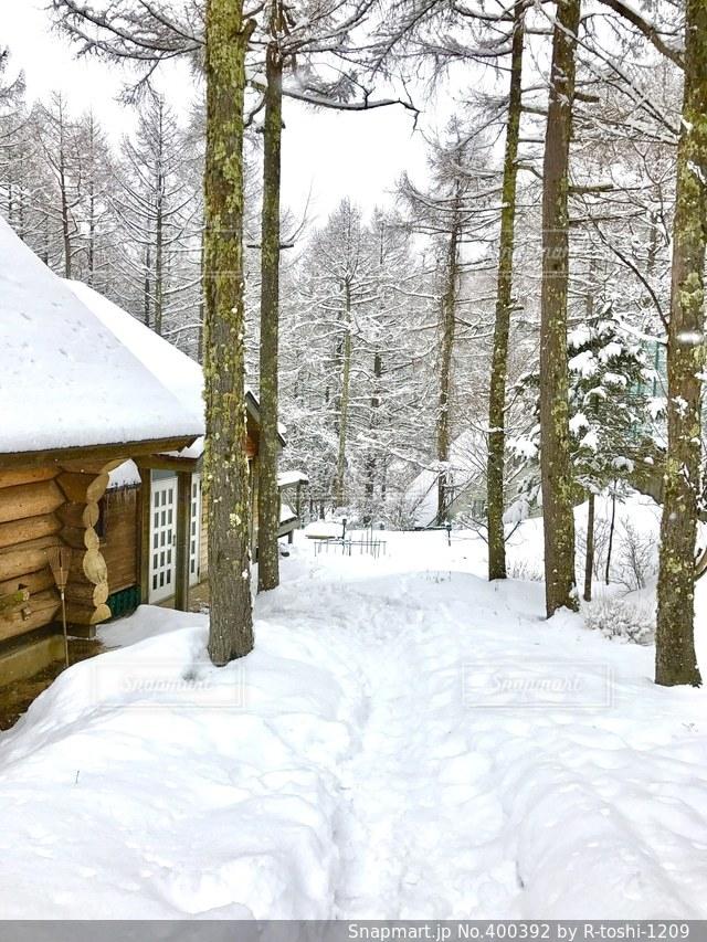 冬,雪,森,ペンション