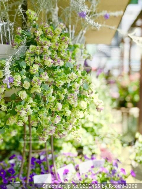可愛い花の写真・画像素材[1211465]