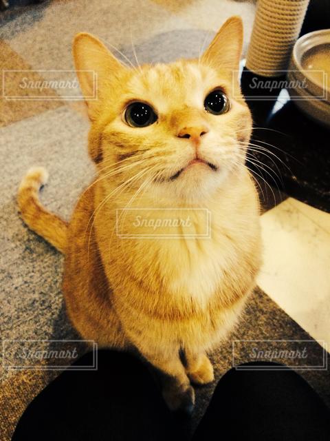 猫の写真・画像素材[121701]