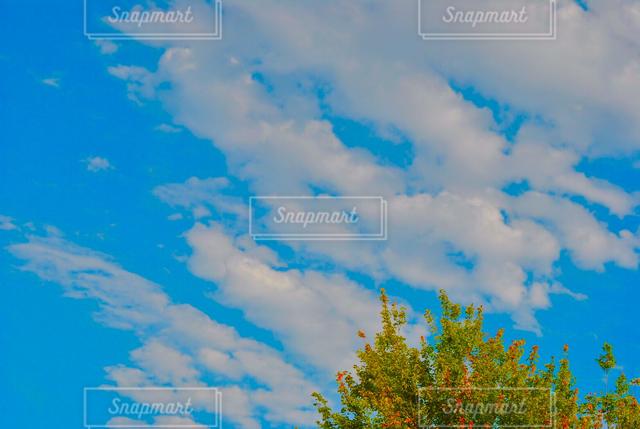 自然の写真・画像素材[121381]
