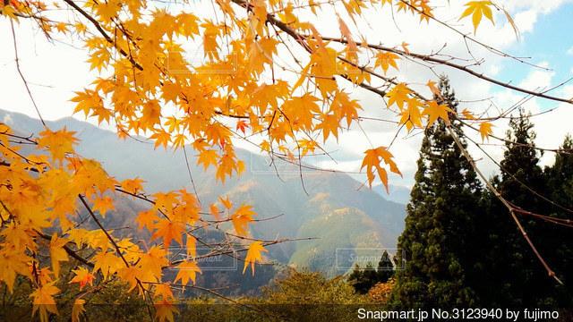 山並みとカエデの紅葉の写真・画像素材[3123940]