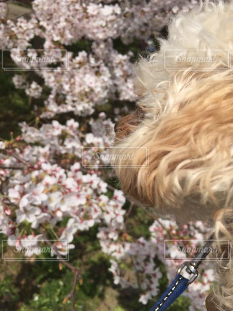 犬の写真・画像素材[121955]