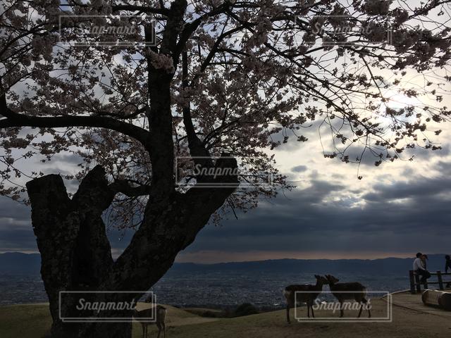 屋外の写真・画像素材[122218]