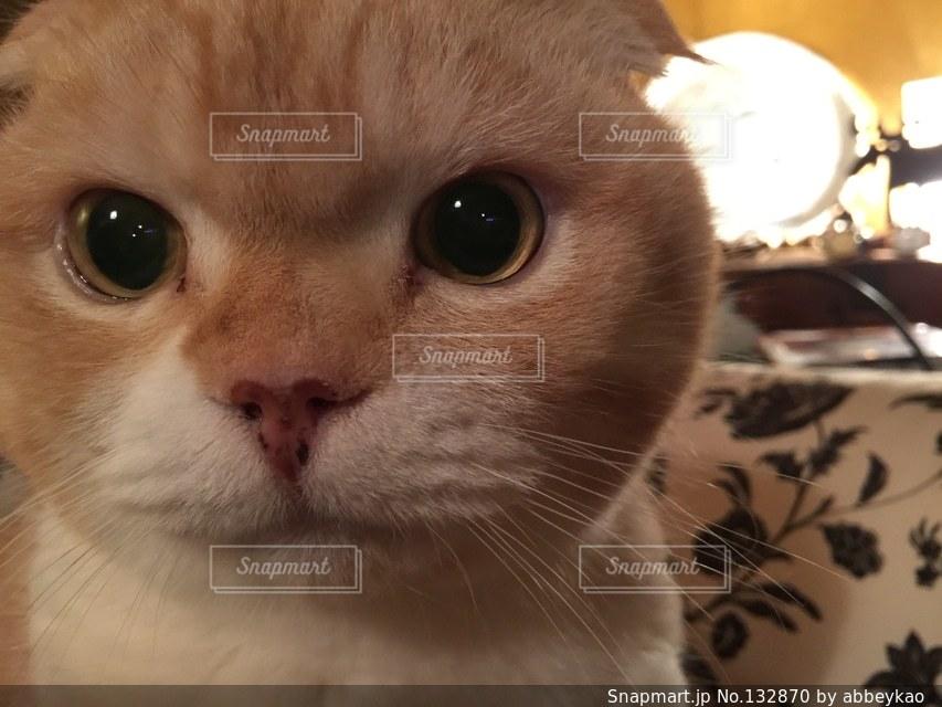 猫の写真・画像素材[132870]