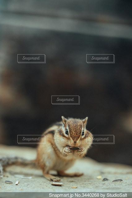 リスの食事風景の写真・画像素材[3440268]