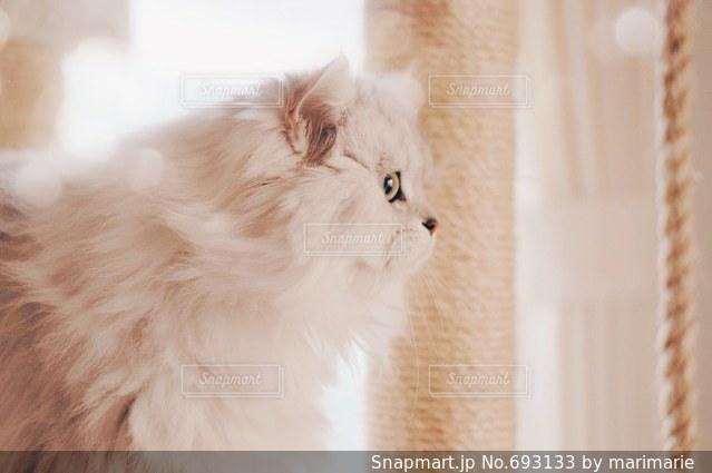 猫の写真・画像素材[693133]
