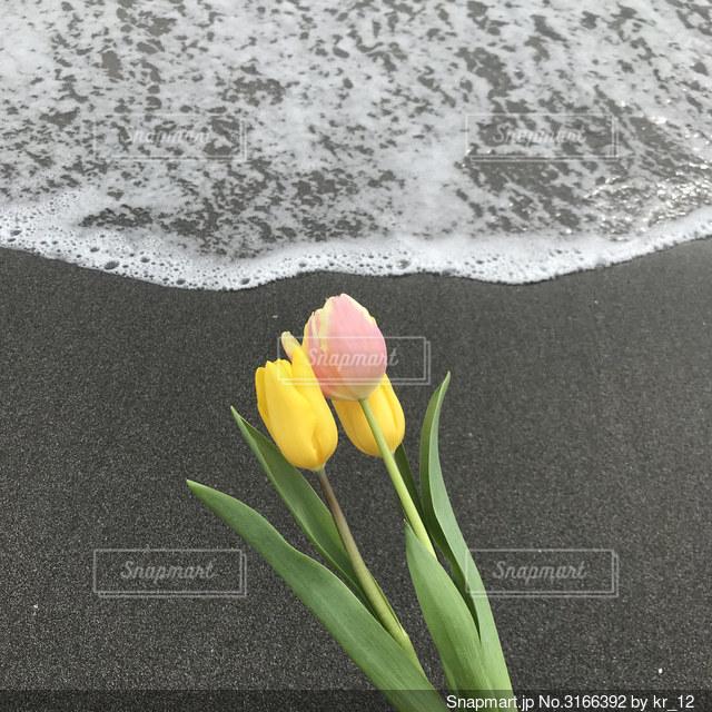 波とチューリップの写真・画像素材[3166392]