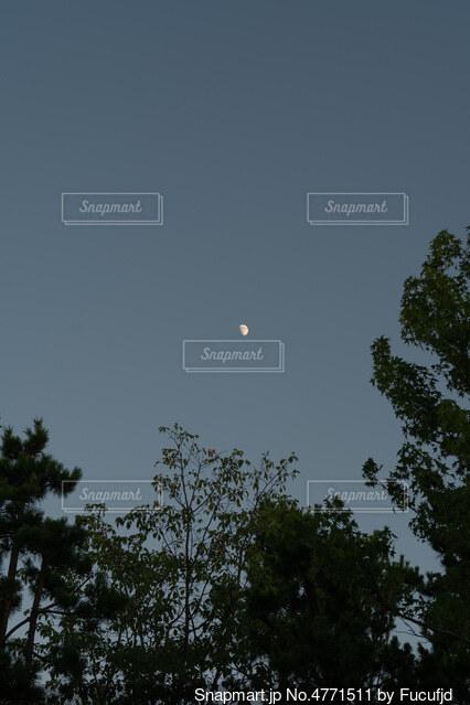 月の光の写真・画像素材[4771511]
